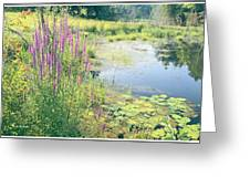 Summer Pond In The Berkshires Greeting Card