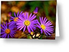 Summer Purple Greeting Card