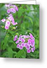 Summer Purple Flower Greeting Card