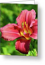 Summer Red Lily Greeting Card