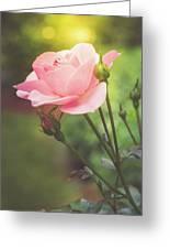 Summer Rose Greeting Card