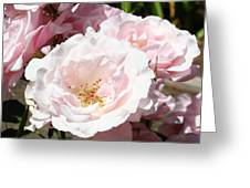 Summer Rose Garden Pink Flowers Baslee Troutman Greeting Card