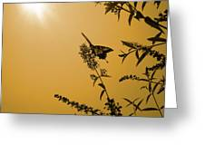 Summer Silhouette Greeting Card