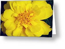 Summer Solstice Marigold Greeting Card