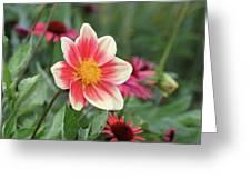 Summer Starlet Greeting Card