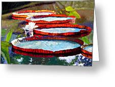 Summer Sunlight On Lily Pads Greeting Card