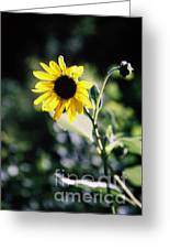Summer Sunshine Greeting Card