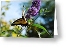 Summer Swallowtail Greeting Card