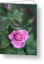 Summer Sweet Rose Greeting Card
