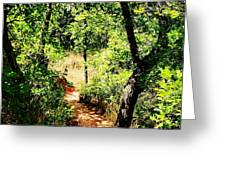 Summer Trail  Greeting Card