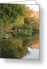 Summer Trees Sunset Greeting Card
