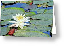 Summer Water Lily Greeting Card