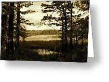 Summer Wetlands Greeting Card
