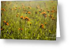 Summer Wildflowers Greeting Card