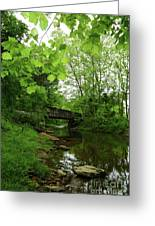 Summer Woodland And The Patapsco River Maryland Greeting Card