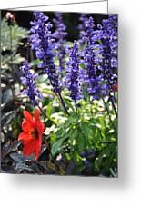 Summerflowers Greeting Card