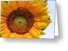 Summer's Bloom Greeting Card