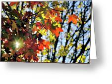 Summer's Gone Greeting Card