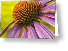 Summer's Here Greeting Card