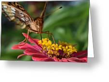 Summer's Sweet Nectar Greeting Card