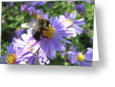 Summertime Bee Greeting Card