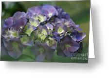 Summertime Blues- Hydrangea Greeting Card