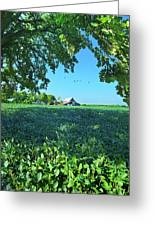 Summertime Blues Greeting Card
