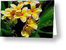 Summertime In Hawaii Greeting Card