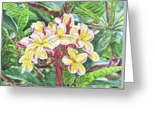 Summertime Kauai Island Plumeria Watercolor By Jenny Floravita Greeting Card