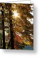 Sun And Autumn Greeting Card