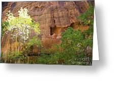 Sun Bathing In The Canyon Greeting Card