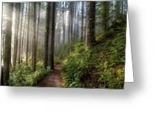 Sun Beams Along Hiking Trail In Washington State Park Greeting Card
