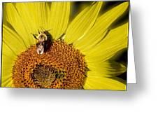 Sun Bee Greeting Card
