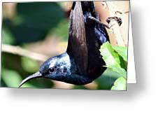 Sun Bird Acrobatics Greeting Card