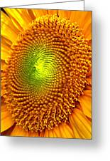 Sun Burst  Greeting Card