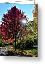 Sun Burst In Autumn Greeting Card