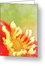 Sun Dancing Greeting Card