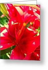 Sun Dappled Lily Greeting Card