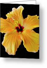 Sun Dew Greeting Card by Lonnie Tapia