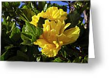 Sun-drenched Yellow Hibiscus Greeting Card