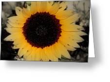 Sun-faded Greeting Card
