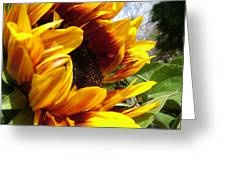 Sun Fire Flower Greeting Card
