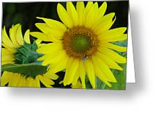 Sun Flower And Honey Bee Greeting Card