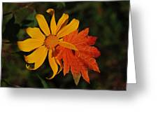 Sun Flower And Leaf Greeting Card