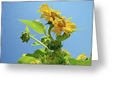Sun Flower Artwork Sunflower 5 Giclee Art Prints Baslee Troutman Greeting Card