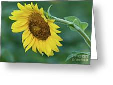 Sun Flower Drop Greeting Card