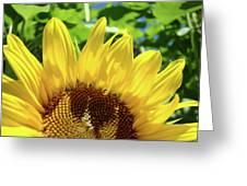 Sun Flower Floral Art Prints Sunflowers Summer Garden Greeting Card