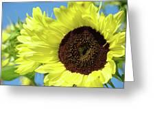 Sun Flower Garden Art Prints Sunflowers Baslee Troutman Greeting Card
