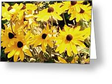 Sun Flower Glory Greeting Card