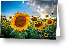 Sun Flower Glow Greeting Card